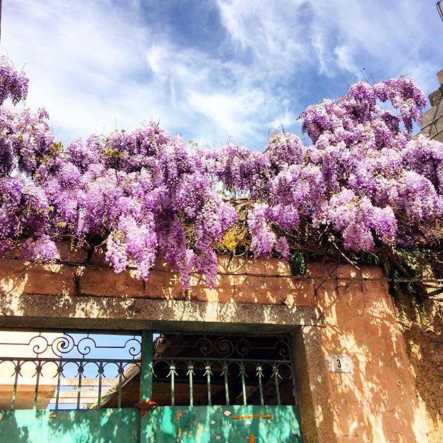 Quanto è bella la Primavera? Fare due passi e riscoprire angoli di paese colorati. Respirare aria nuova, profumi che solo questa stagione può dare. Buongiorno . .