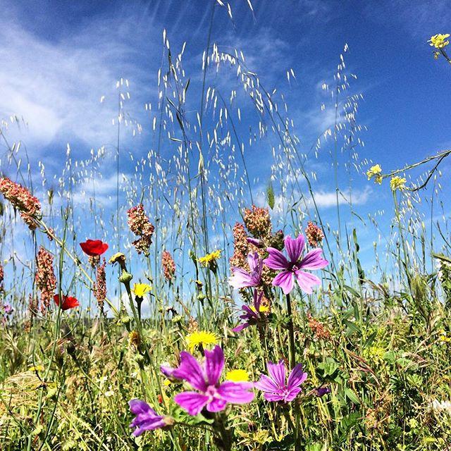Qualche giorno fa...ricordando la primavera in Fiori e cielo, le nostre campagne colorate.