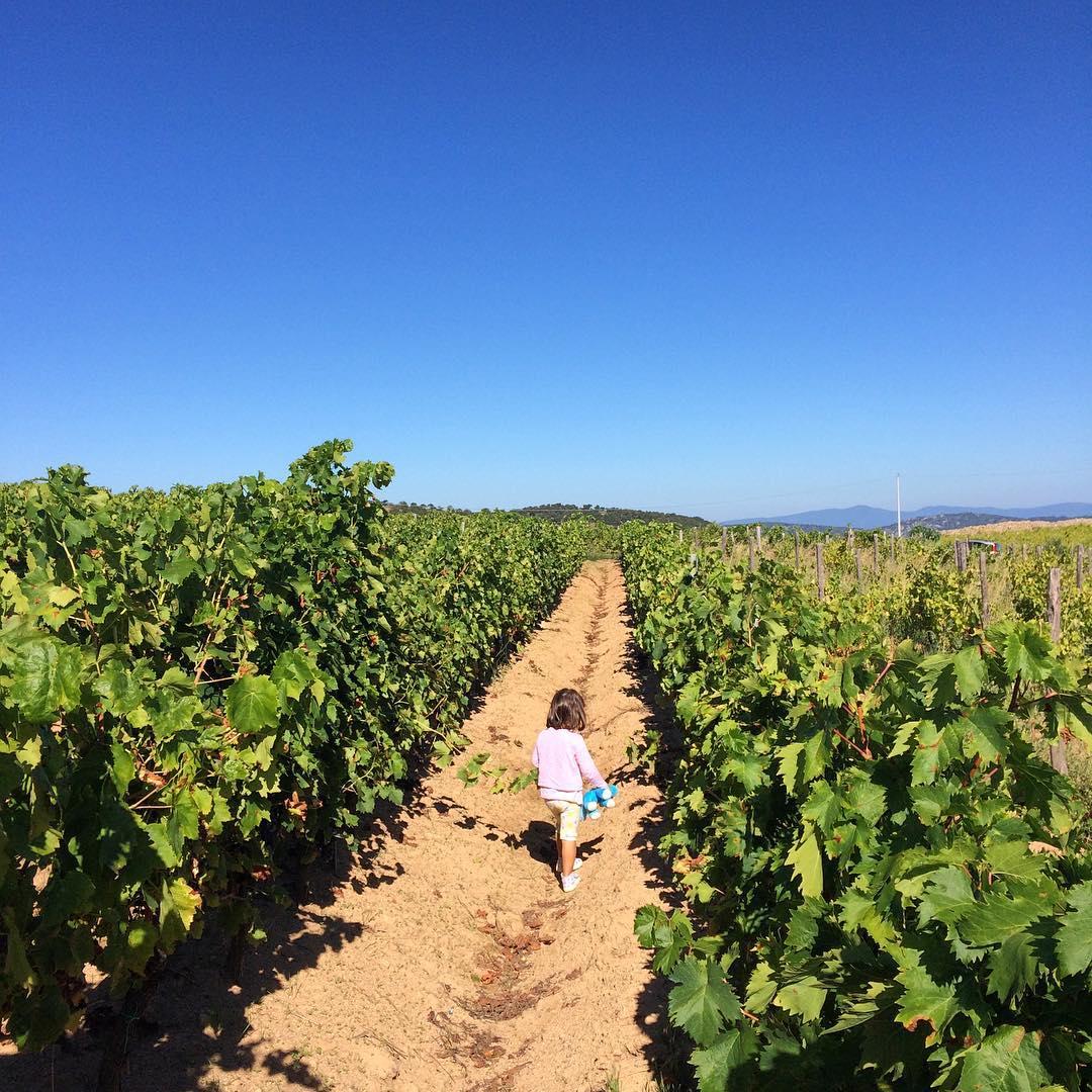 L'immensità e la vigna. Oggi Arianna ci ha seguito alla vigna per verificare lo stato dell'uva. Per i bambini è sempre una gioia scoprire posti nuovi e stare all'aria aperta!