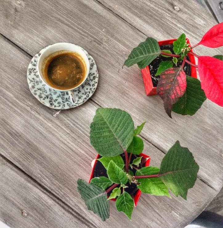 caffè in mendula a su nistru